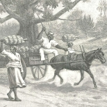 Carriage of Bananas from the Field to the Wharf, Annatto Bay, Jamaica, August 4, 1888, 140