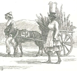 Sugar-cane going to Market, September 15, 1888, 309