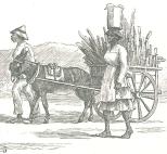 Sugar-cane going to Market, September 15, 1888, 309