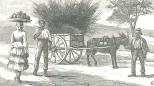 Sugar-cane tops for cattle fodder, September 15, 1888, 309