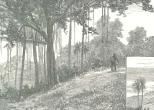 The Bearded Fig-tree; View from St. John's Church, September 15, 1888, 309