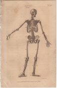 Anatomy, London Encyclopedia, Vol. 2, Plate 1