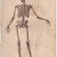 Anatomy, London Encyclopedia, Vol. 2, Plate 2