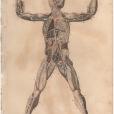 Anatomy, London Encyclopedia, Vol. 2, Plate 5