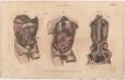 Anatomy, London Encyclopedia, Vol. 2, Plate 6