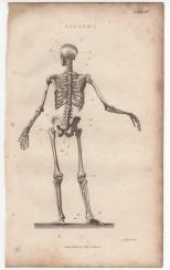 Anatomy, Portable Encyclopaedia, 1826 1