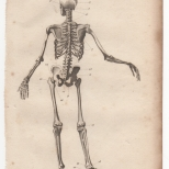Anatomy, Portable Encyclopaedia, 1826 1