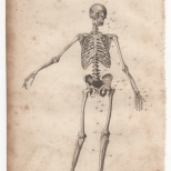 Anatomy, Portable Encyclopaedia, 1826