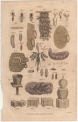Apis, London Encyclopedia, Vol. 2