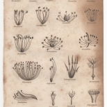 Botany, Portable Encyclopaedia, 1826