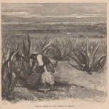 Maguey Fields in the Valley of Mexico, The Century, Vol. 23, 1881-2