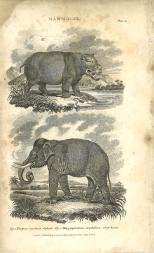 Mammalia, Plate 10, British Encyclopedia, Vol 3, 1809