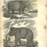 Mammalia, Plate 10, British Encyclopedia, Vol 3, 1809