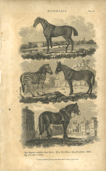 Mammalia, Plate 11, British Encyclopedia, Vol 3, 1809