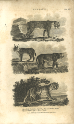 Mammalia, Plate 14, British Encyclopedia, Vol 3, 1809