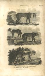 Mammalia, Plate 14, British Encyclopedia, Vol 3, 1809