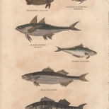 Pisces, Plate 1-1, London Encyclopaedia, Vol. 17, 1829